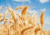 Alergia al trigo: Tratamiento