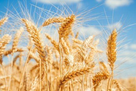 小麦过敏: 治疗