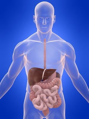 Améliorez votre système digestif