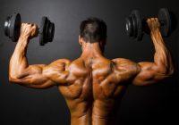 Menos miostatina es igual a más masa muscular