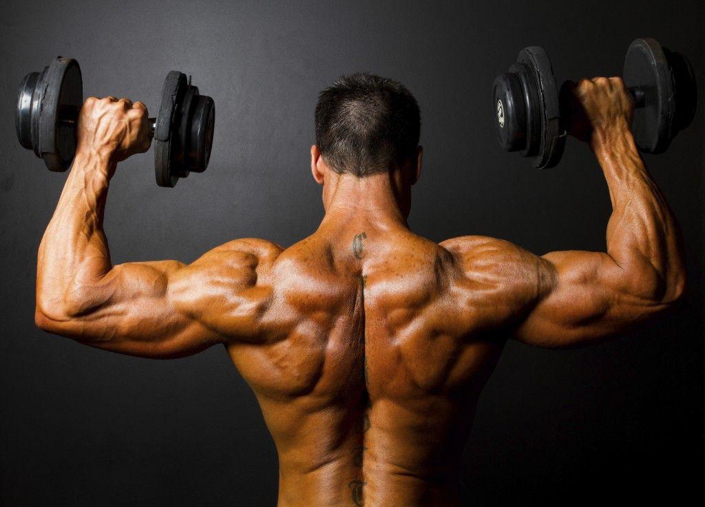 Myostatin कम बराबरी और अधिक मांसपेशियों