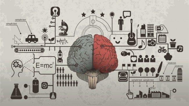 मस्तिष्क के बाएँ गोलार्द्ध, मस्तिष्क के दाएँ गोलार्द्ध