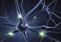 remèdes naturels pour la maladie de Parkinson