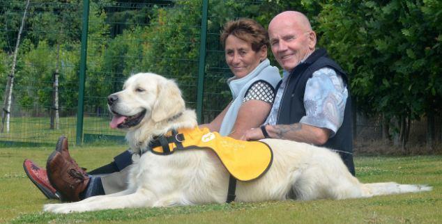 डिमेंशिया के इलाज के लिए कुत्तों