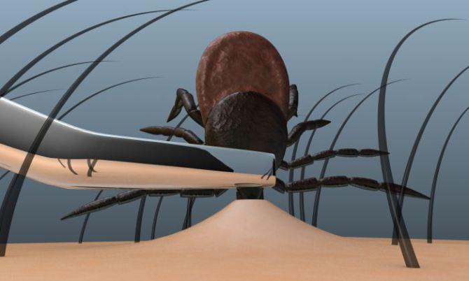 रोकने के लिए और ticks निकालने