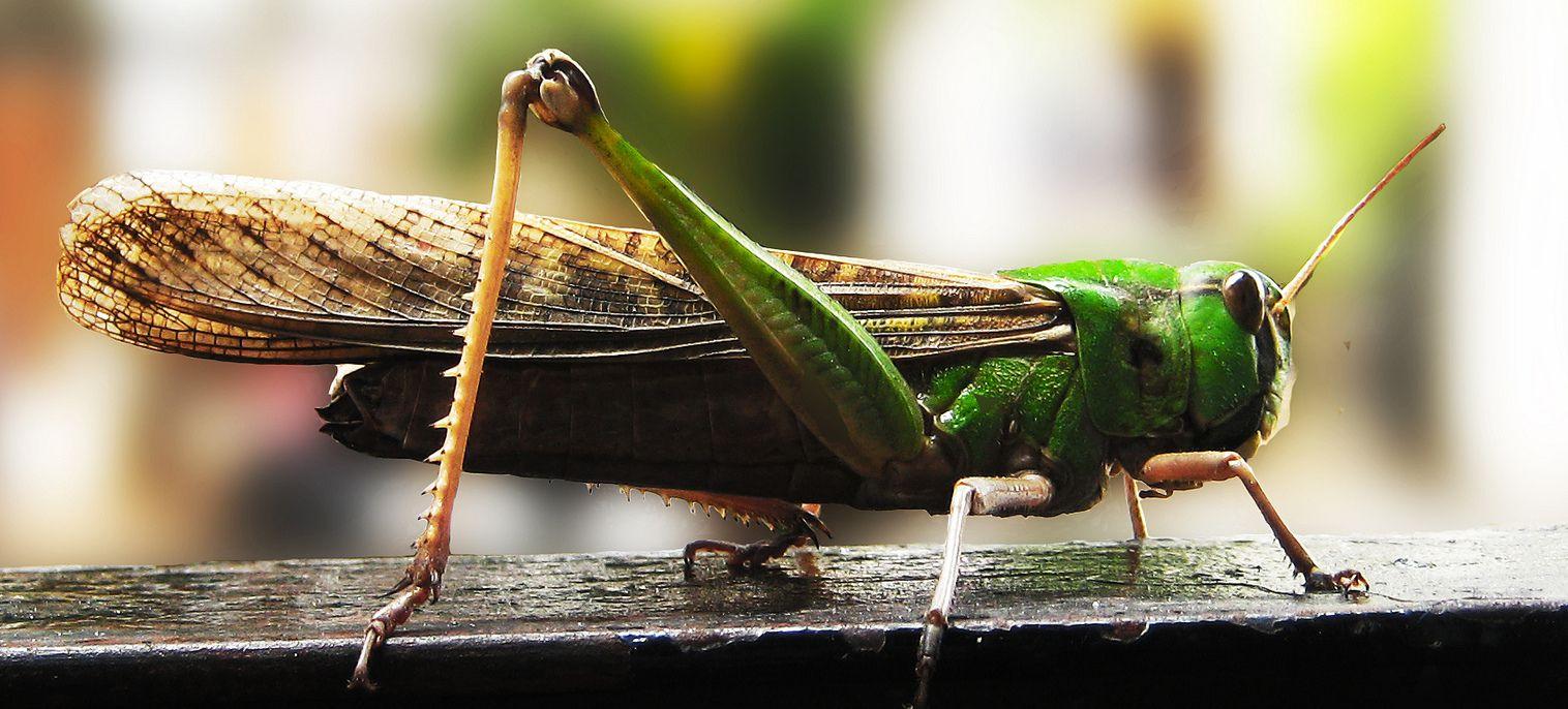 insectos para comer