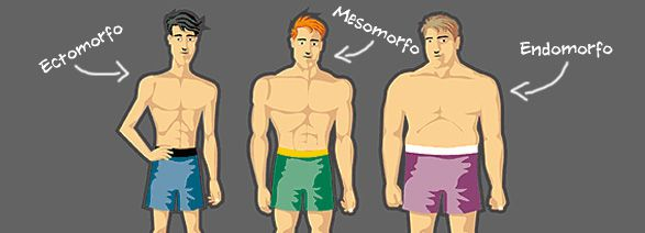 Image des types de corps: ectoforme, mésomorphe, endomorphe
