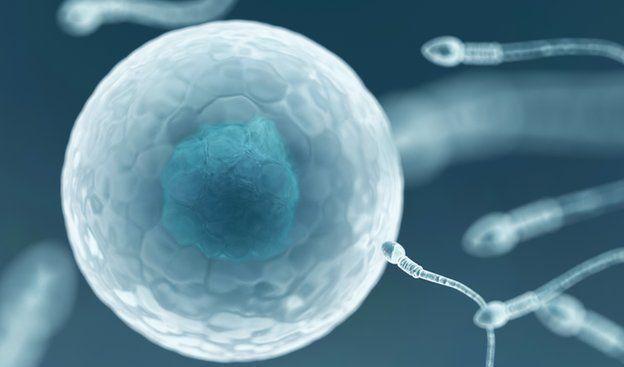 doação de esperma