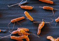 Helicobacter pylori und assoziierte Krankheiten