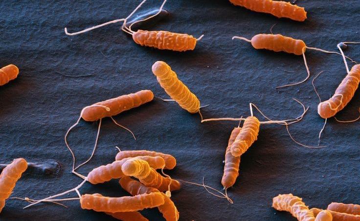 Helicobacter pylori in sorodne bolezni