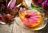 A echinacea pode fazer mais do que curar resfriados?