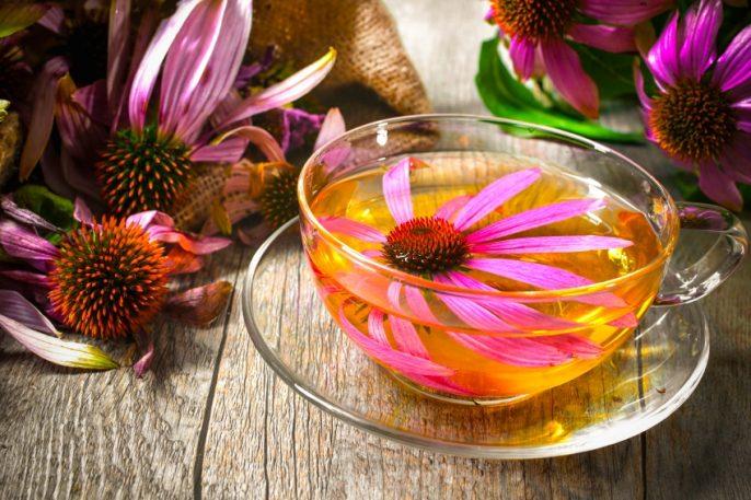 Kann Echinacea mehr als Erkältungen heilen?