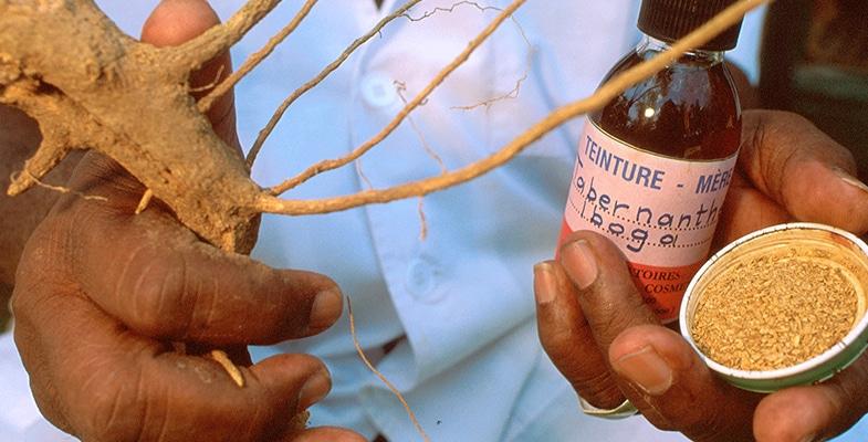 L'ibogaïne est une dépendance de mesure sécuritaire et efficace, ou quelque chose qui va tuer?