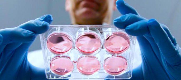 Dientes cultivados en laboratorio: La odontología sobrepasa fronteras