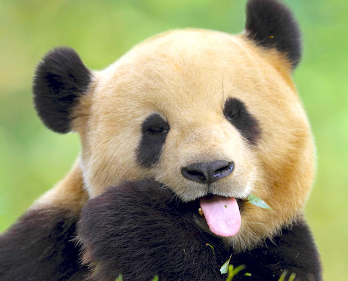 熊猫: 当链球菌感染会导致强迫症