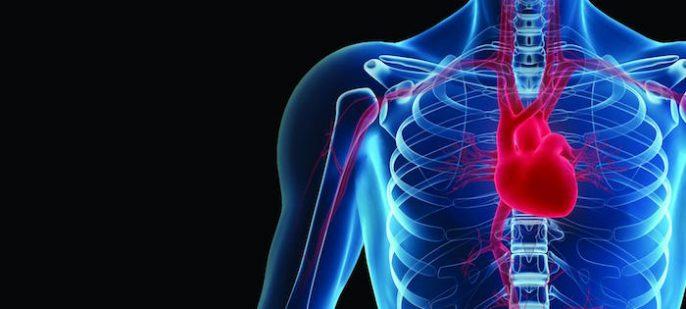 ¿Por qué la vitamina K2 es fundamental para la buena salud de los huesos y del corazón?