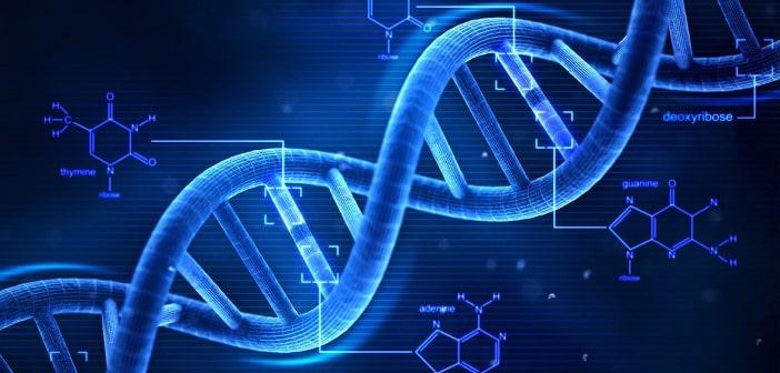 Est-ce obésité génétique? L'influence des gènes sur le poids