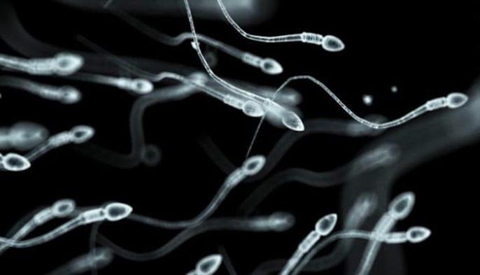 Aumentar la cantidad de espermatozoides
