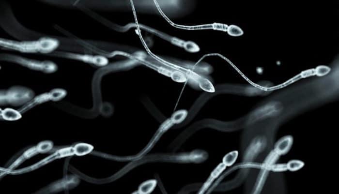 增加精子量