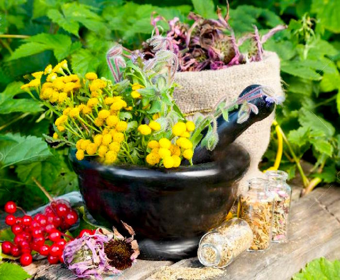 Dejstva o snovi zelišč, Homeopatska in splav