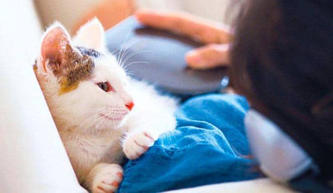 Vivir con una mascota a la que usted es alérgico