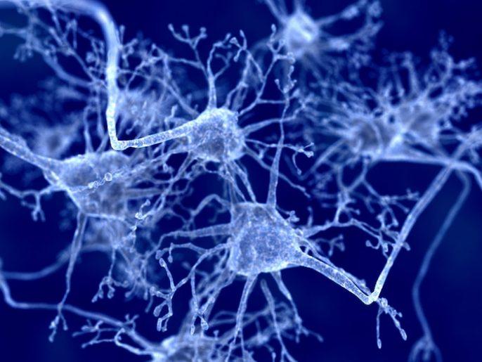 Veneno medioambientales pueden hacer, otras formas de Alzheimer y de demencia