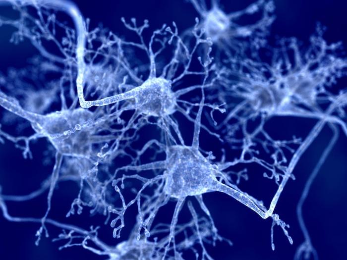 毒药环境可以做, 其他形式的阿尔茨海默氏症和老年痴呆症