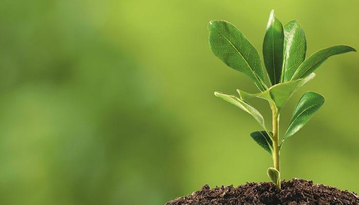 Rastline absorbirajo tudi nikotina v kadilci