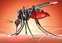 10 Enfermedades transmitidas por mosquitos