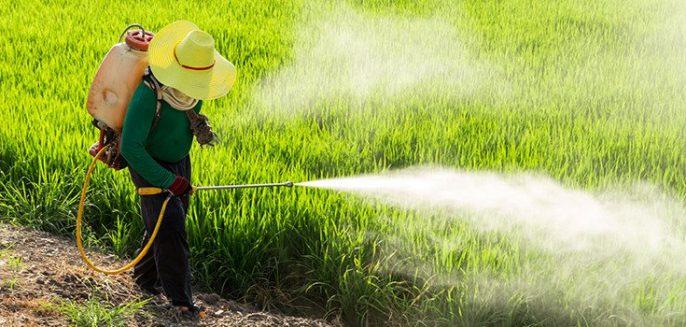 Pesticidas - Lo peligroso que es para nuestra nutrición