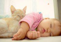 Votre chat peut-il dormir en toute sécurité dans le berceau de votre bébé?