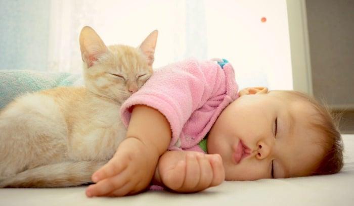 可以安全地睡在婴儿床上你的猫?