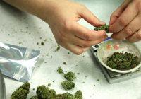 Synthetisches Marihuana: Kommt es aus Kräutern und ist es harmlos?