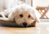Warum kann es besser sein, ein Haustier zu haben, als eine Pille einzunehmen?