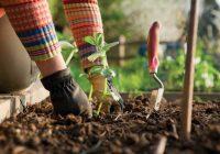 Warum ist Gartenarbeit sehr gut für Ihre körperliche und geistige Gesundheit?