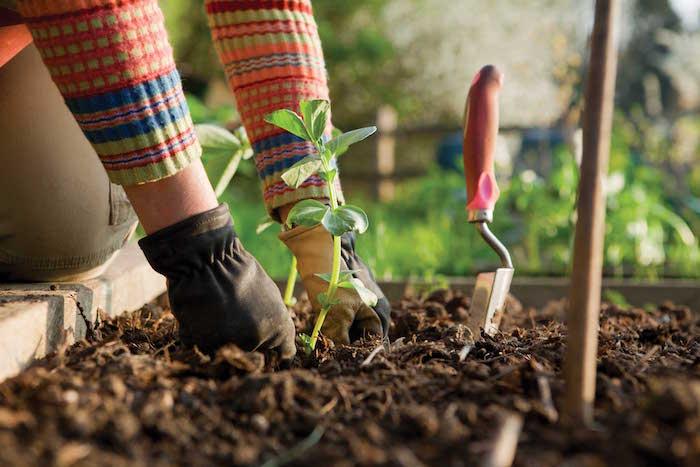 Zakaj vrtnarjenje je zelo dobro za svoje telesno in duševno zdravje?