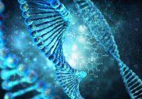 Multitasking unserer Gene