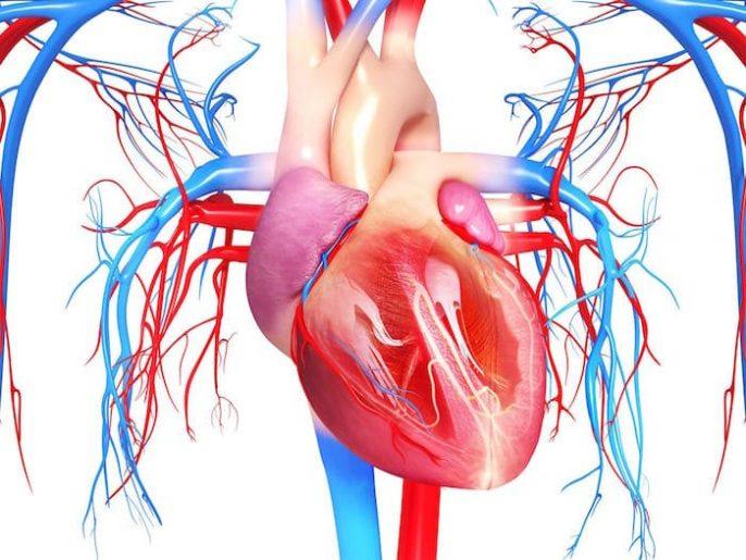 التهاب عضلة القلب: الأعراض والتشخيص والوقاية