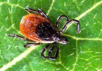 Langfristig war der Einsatz von Antibiotika bei der Behandlung der Lyme-Borreliose nicht erfolgreich