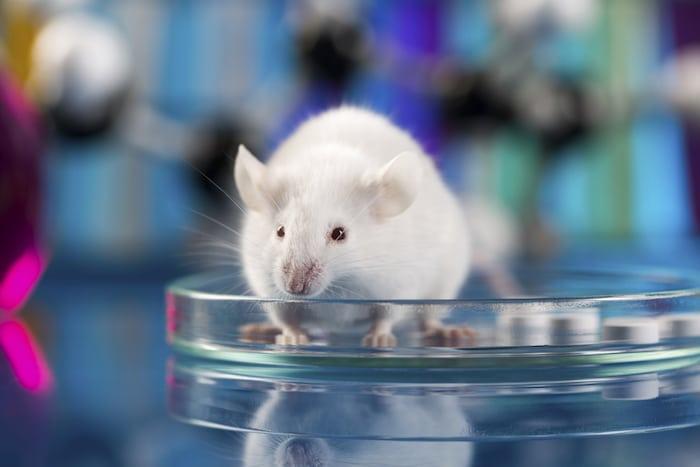 Les scientifiques de créer des souris sans mère: Qu'il sera possible un jour que les deux parents peuvent avoir des bébés?