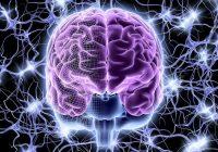 El estrés, la enfermedad de alzheimer y la enfermedad del cerebro