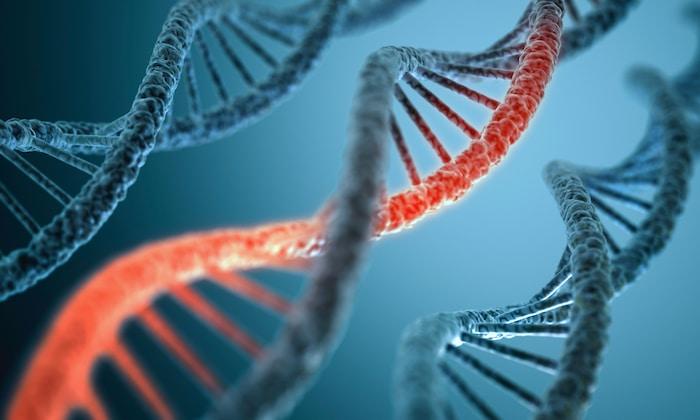 L'ADN d'autres créatures sera le secret de la régénération des membres perdus