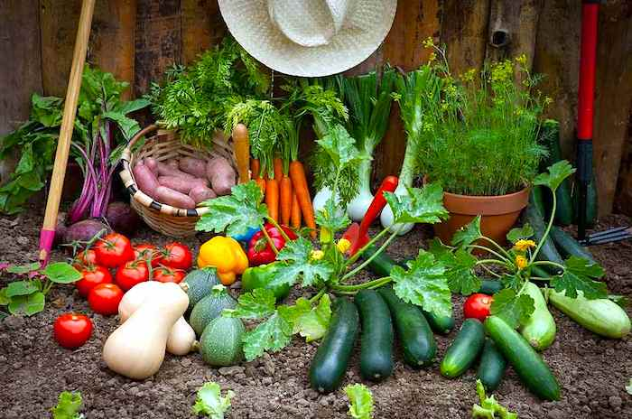 Como as coisas funcionam: Sistemas alimentares biológicos