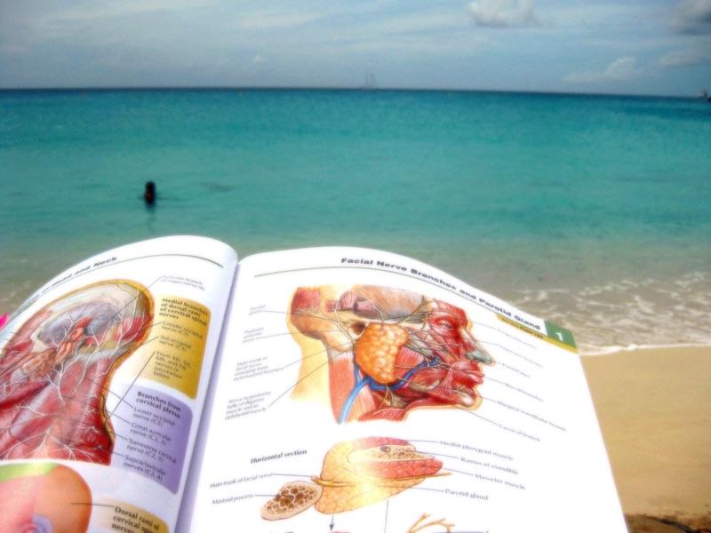 Le 3 les meilleures écoles de médecine dans les caraïbes à considérer