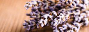 5 hierbas calmantes para calmar la ansiedad