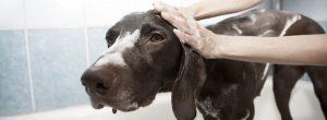 你应该多久洗你的狗?