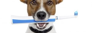 4 de los problemas más comunes de los dientes de perro