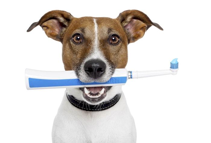 4 dos problemas mais comuns de dentes de cachorro