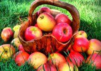Hilft Apfelessig und Backpulver beim Abnehmen oder ist diese Diät ein weiterer Betrug?