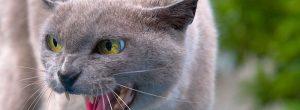 Cuidado con las mordedura de gato